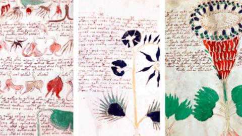 Qué está escrito en el manuscrito Voynich