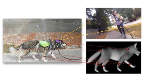Inteligencia artificial comportamiento perros