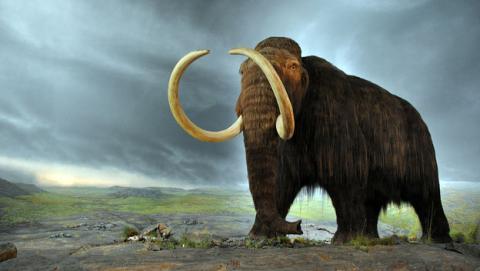 La ciencia podría clonar mamuts, una especie extinta.