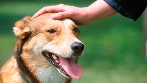 Con este método puedes saber la edad exacta de tu perro