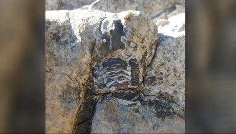 Niña de 11 años encuentra un fósil de hace 475 millones de años