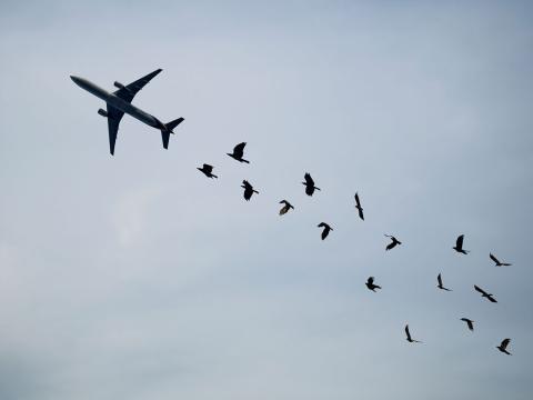 avión pájaros