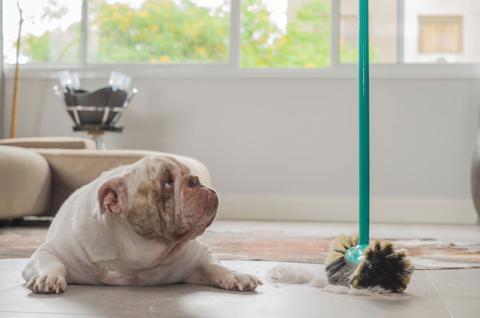 limpiar casa perro