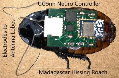 Cucarachas robot