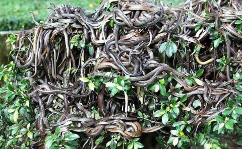 Isla de las Serpientes