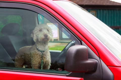 Tesla Modo Perro