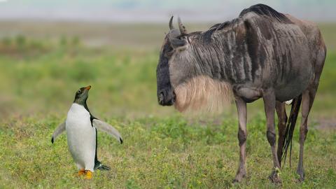 Linux y GNU/Linux ¿cuál es la diferencia?