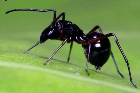 Leche de araña