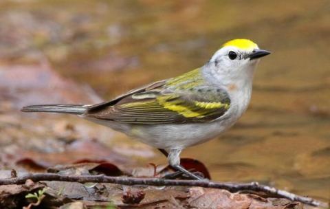 Pájaro híbrido