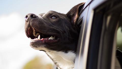"""Tesla presenta un """"Modo perro"""""""