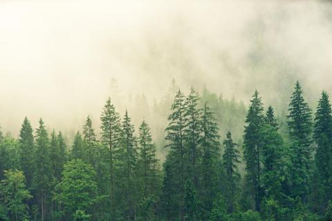 Árboles bosque