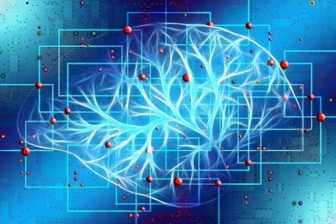 cerebro estimulacion