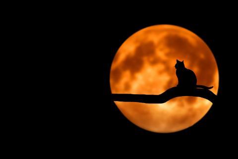 luna con gato en arbol