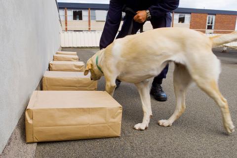 perro policía drogas