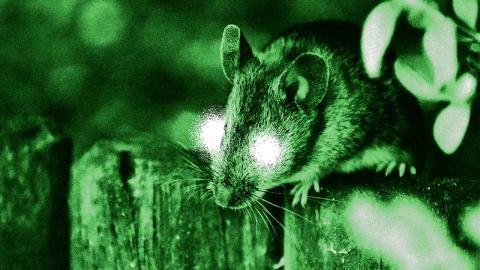 Ratón visión nocturna