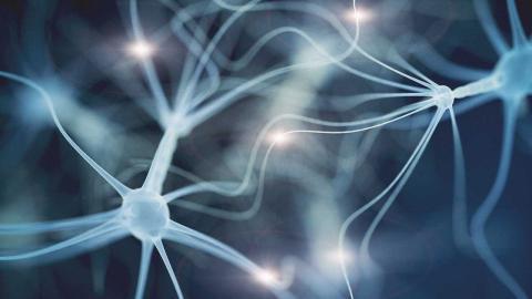 Interfaz cerebro
