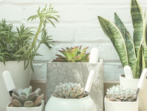 Plantas Xiaomi