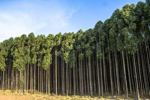 Grafeno ecológico