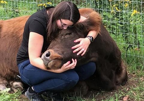 Abrazando una vaca