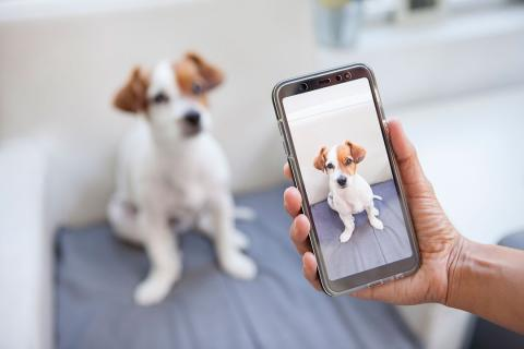 Hacer foto de un perro con el móvil