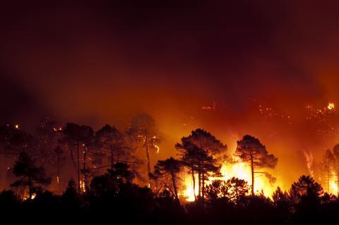 Incendio forestal fuego