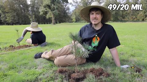 Plantar millones de árboles