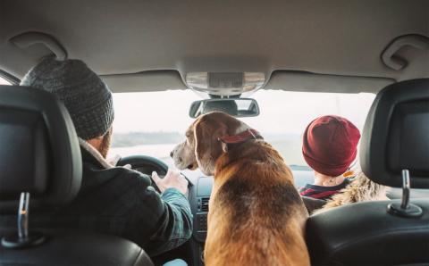Perro en el coche