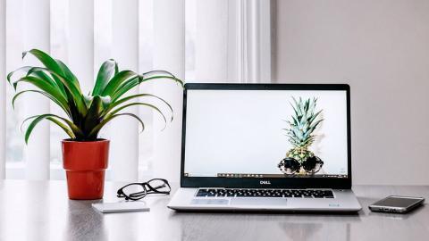 Planta en un escritorio