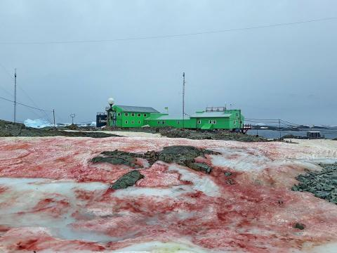 Nieve roja en la Antártida