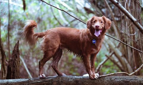 Perdidus placa identificativa para perros