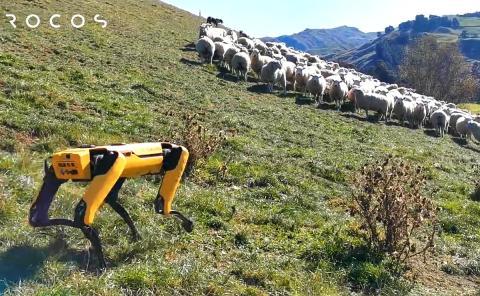 Perro pastor robot