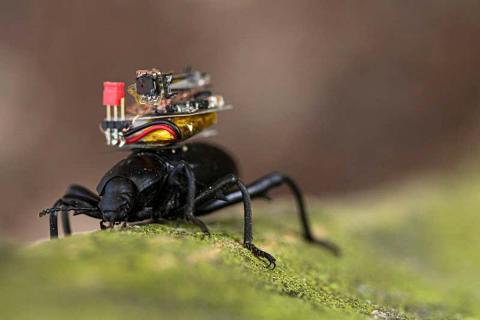 Cucarachas con cámara