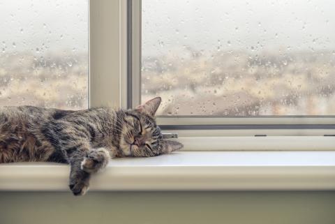 Gato dormido en la ventana