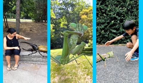 Insectos 3D Google