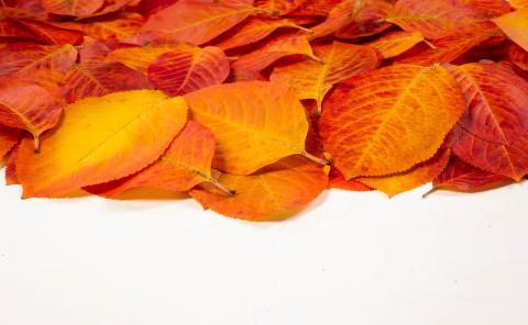 hojas otono