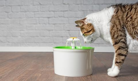 Gato fuente de agua