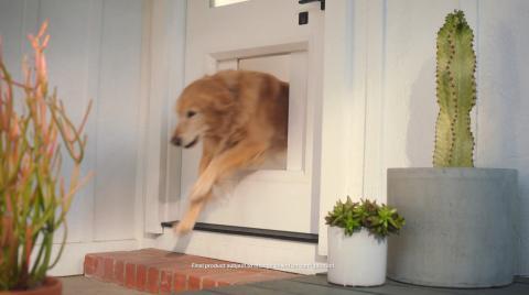 Puerta inteligente mascotas