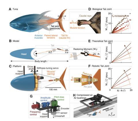 Robot con forma de pez