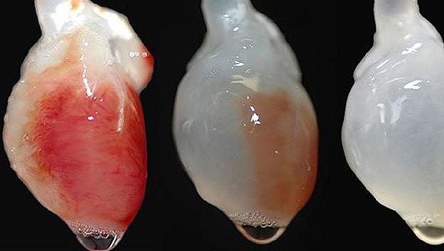 Los órganos impresos con impresoras 3D tienen un futuro prometedor