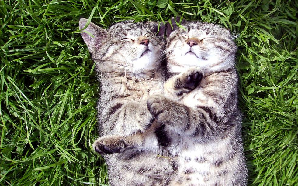 Fondos de pantalla de gatitos