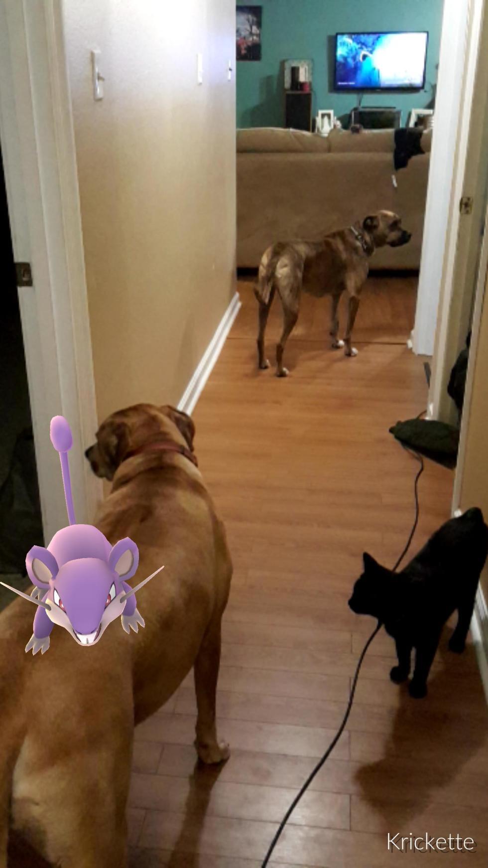 Los fans de Pokémon Go se han dedicado a colocar a los Pokémon en realidad aumentada en situaciones complicadas